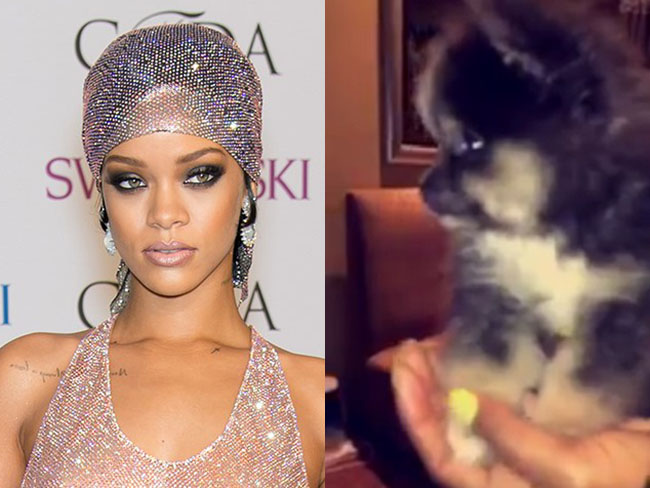 Rihanna goes to the club, comes home with a puppy