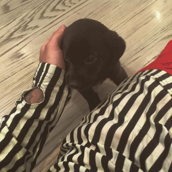 "JB proudly showed off his new arrival, a black labrador retriever, via Insta. ""New addition to the family his name is Phil, he captioned this redic cute snap. Awwwww."