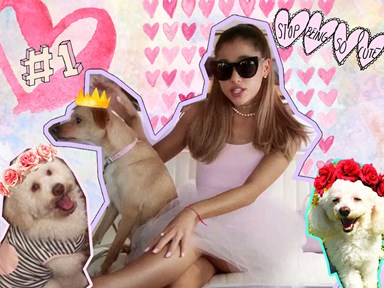 14 reasons why dogs are better than boyfriends