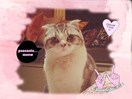 Taylor Swift's cat Meredith has been giving people the stink eye from her swanky NYC apartment