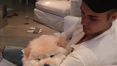 Justin Bieber's puppy needs life-saving surgery after he gave him up
