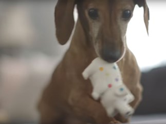 Dog reunited with lost toy after five years video