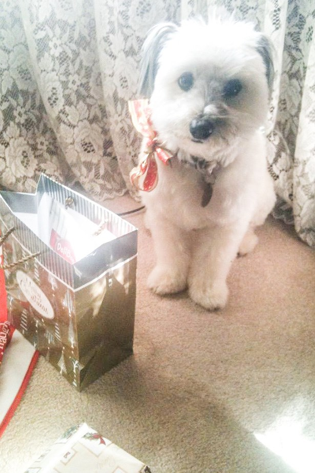 SAMMY CULBERT, son of Laura Culbert, deputy chief sub-editor. Sammy's favourite thing at Christmas is, of course, all the presents he gets. You can tell he's just tolerating having his picture taken here – he really wants to rip into all the treats Santa brought him!