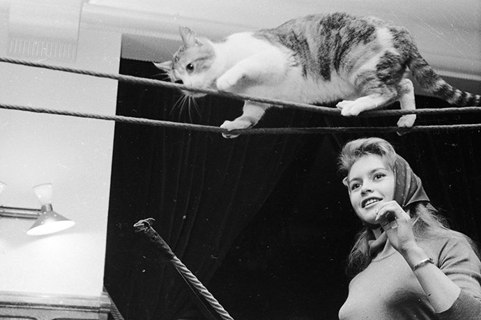 In 1955 French actresss and bonafide bombshell Brigitte Bardot was rocking scarves and coaxing a cat along a wire.