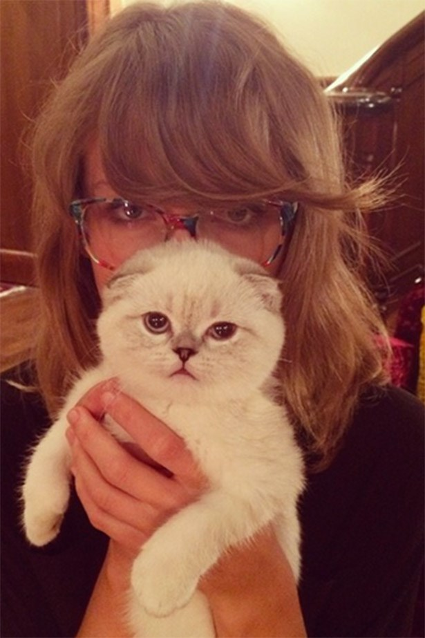 One more of Taylor Swift for good luck. Who knew putting cute kittens on the internet would be such a thing?!