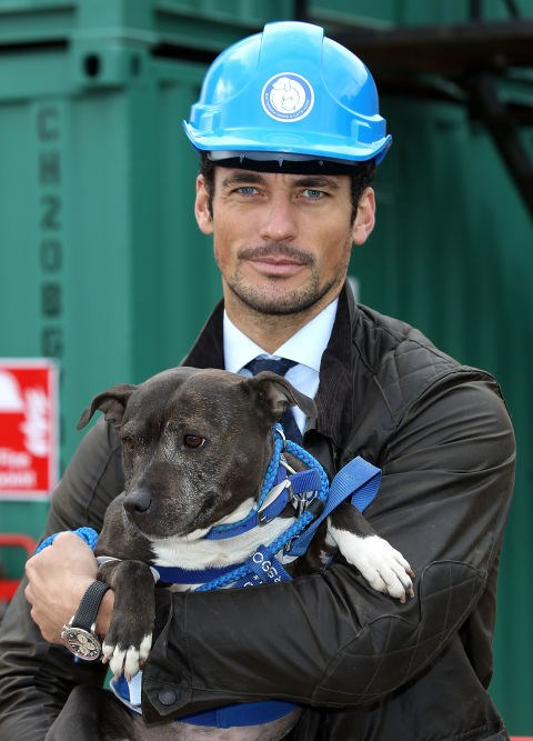 DAVID GANDY I mean...even the dog can't handle how hot David Gandy's face is.