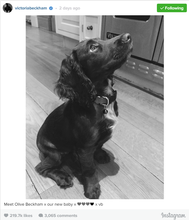 The Beckham's have a new addition to their family and she is the cutest 'lil thing we've seen. Also, her name is Olive! Adorable.
