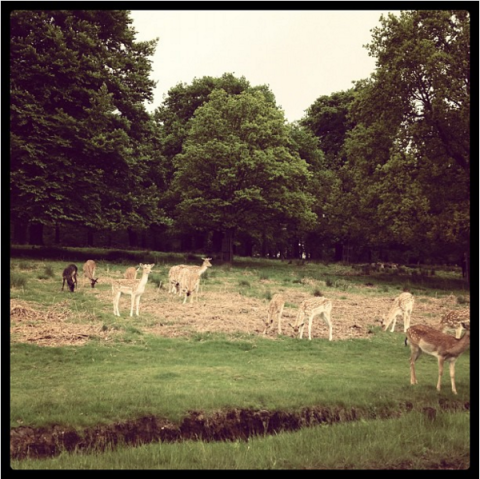 "<strong>HARRY STYLES' FIRST INSTAGRAM</strong><br><br> Aptly captioned, ""Deerstagram?"" this photo, from about four years ago, began Harry's long feed of artistic, vague pictures. Somewhere along the way he traded in colour images for a feed of black and white.<br><br> Credit: <a href=""https://www.instagram.com/harrystyles/?hl=en"">@harrystyles</a>"