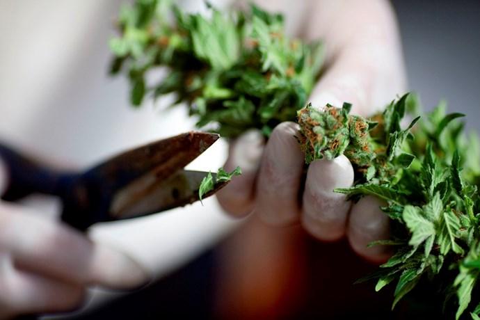 prescribed medicinal cannabis