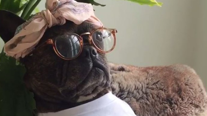 pam the frenchie