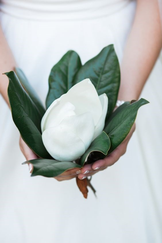 <p> <em>Magnolias</em><p> <p> Magnolias and their leaves have had their place in the wedding bouquet world for a while, but carrying a magnolia-only bouquet is a sweet way to minimalise and simplify your bouquet due to their big flowers and big, glossy leaves.<p> <p> Image via Pinterest.