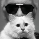 Devastating News For Karl Lagerfeld's Cat, Choupette image