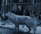This Is Why 'Game Of Thrones' Keeps Cutting Out Direwolf Scenes