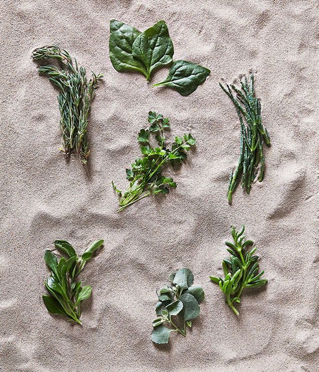 Clockwise from top left: seablite, warrigal greens, marsh samphire, karkalla, saltbush, barilla, sea parsley.