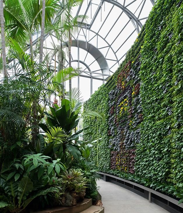 The calyx opens at the royal botanic gardens sydney for Au jardin restaurant botanic gardens