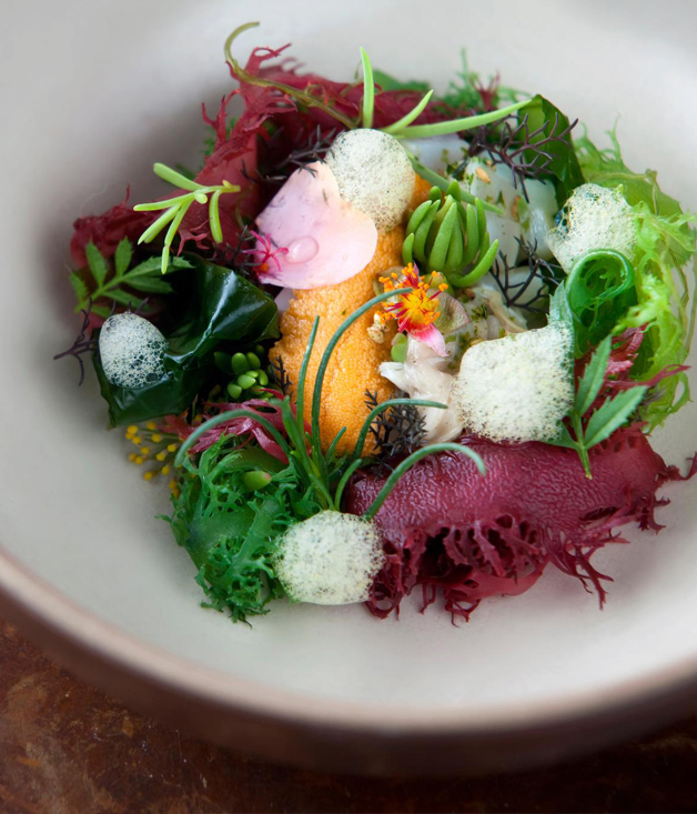 Sea Urchin with Local Shellfish, Seaweed, Wild Beach Herbs and Yuzu
