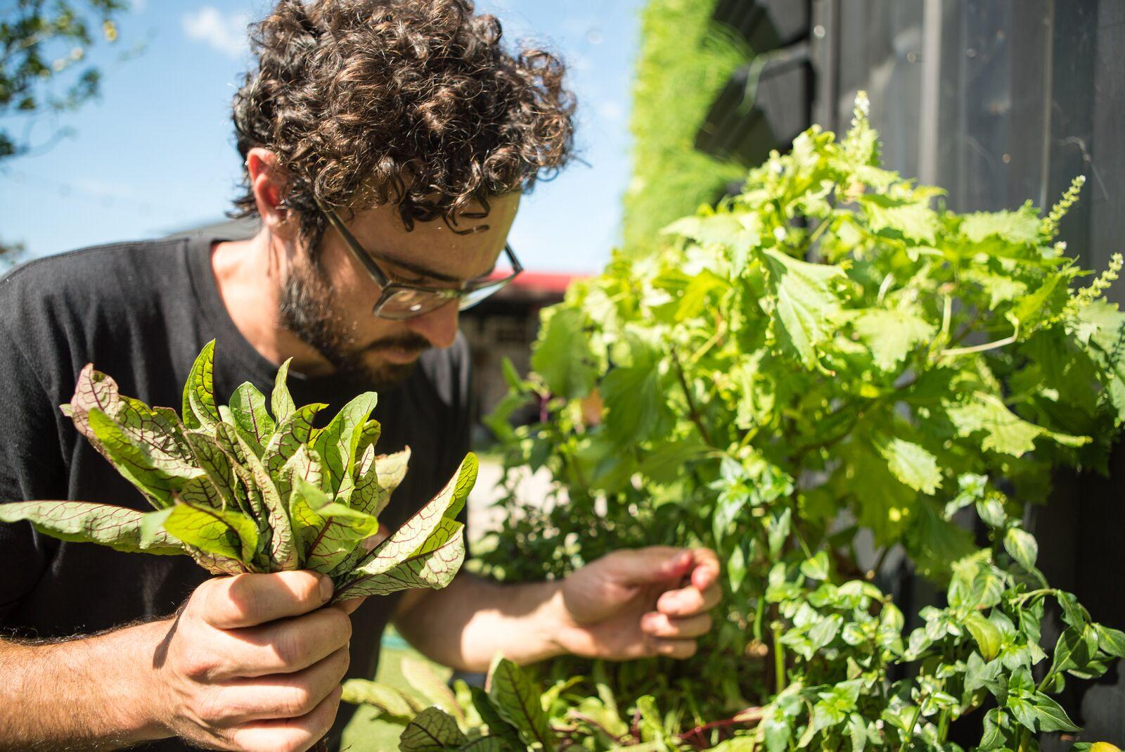 10 golden rules of the summer veggie patch :: gourmet traveller