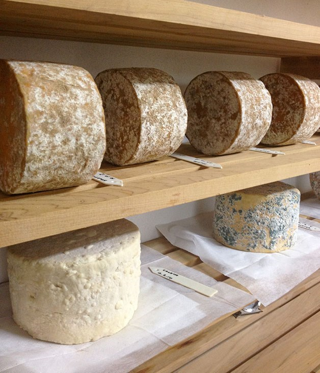 Raw milk cheeses in New Zealand