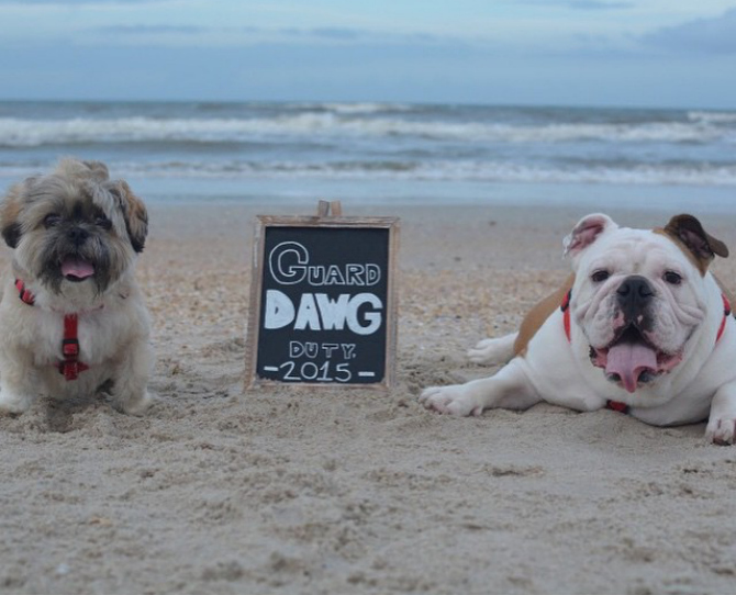 14 Adorable Pets Announce Their Parent's Pregnancy