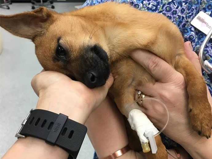Luckiest dog in the world is rescued after suffering a heroin overdose