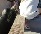 Little girl pulled into the water by a sea lion is now being treated for a rare infection