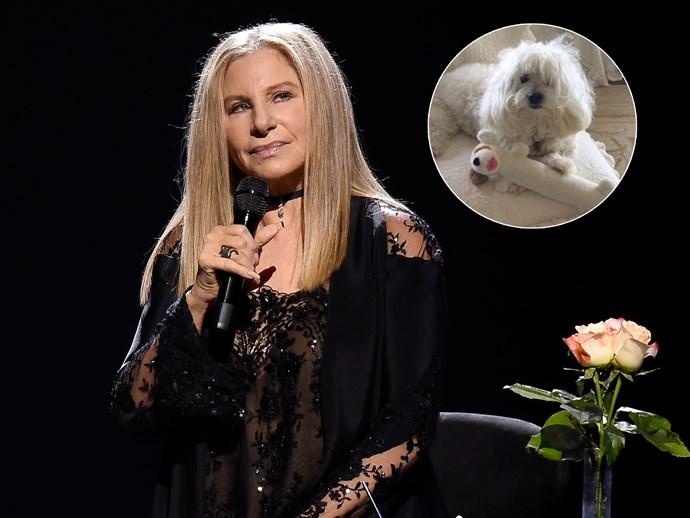 Barbra Streisand dog Sammie