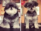 Is this the best dog Instagram account ever?