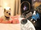 The very best dog-friendly hotels around Australia