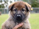 QLD police asks public to name its new puppy litter and the cuteness is too much