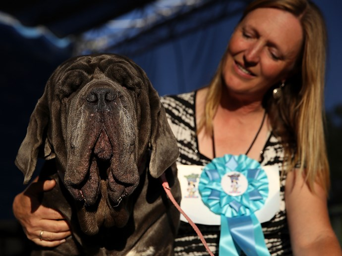 Martha wins Ugliest Dog in the World competition