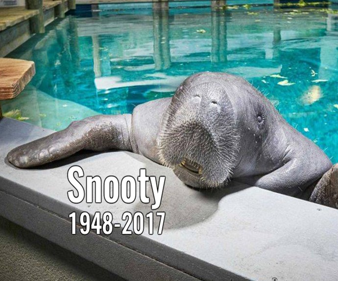 Snooty, the world's oldest Manatee has died
