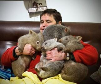 Meet the wombat wonder mum of Flinders Island