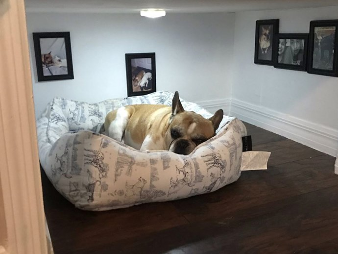 This man built his French bulldog a mini-room all of his own