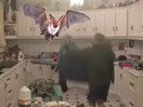 Watch: Irish family thrown into hilarious chaos as home is terrorised by a bat