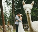 12 cute wedding photos that will make you laugh out loud