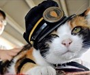 Take a look at the world's first cat cafe TRAIN