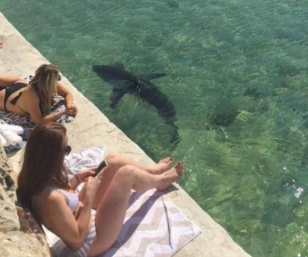 manly beach, Sydney, Manly Sea Life Sanctuary, Fairy Bower Pool, shark