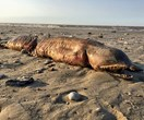Terrifying sea monster found washed ashore after Hurricane Harvey