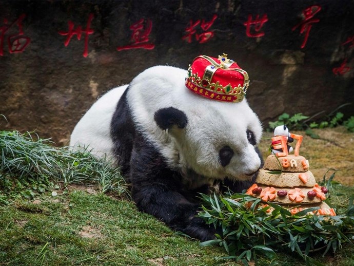 Basi, the world's oldest giant panda has died at the age of 37