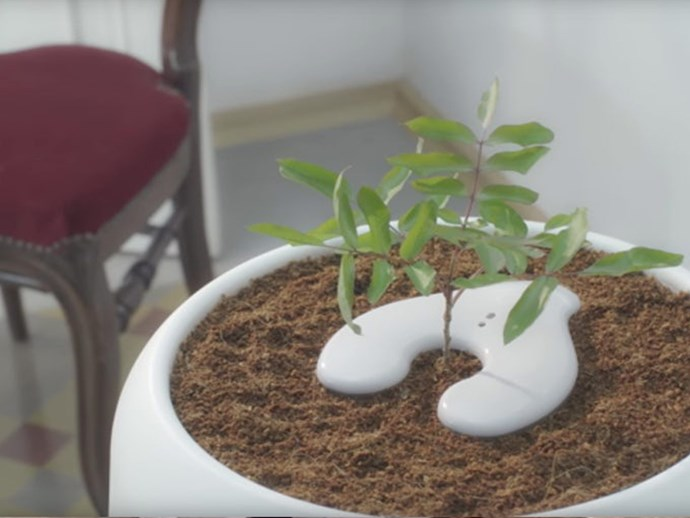 New urn will transform your loved one's ashes into a tree