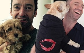 Hugh Jackman and his new cavoodle.