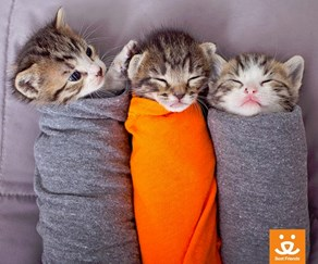 Kitty Burritos are the cutest winter warmers
