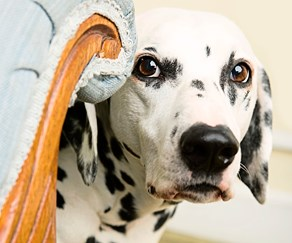 Fighting your pet's fear