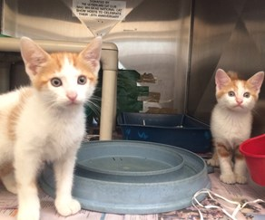 Five pairs of kittens that need a forever home