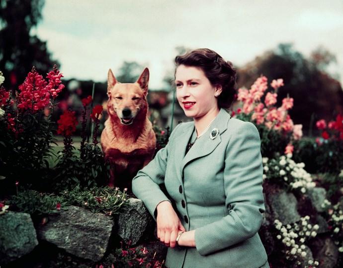 March,1953: Queen Elizabeth II in the garden with her dog.