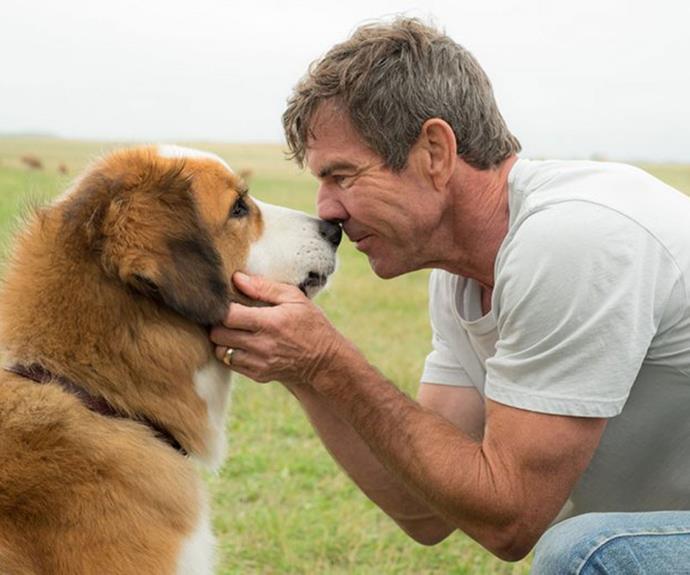 A Dog S Purpose Animal Abuse Real Footage