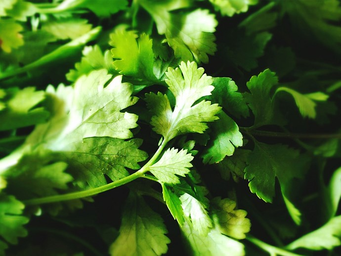 Hate coriander? There's a scientific reason for that