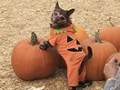 This adorable dog slayed his pumpkin patch photo shoot