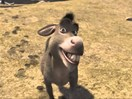 Donkey cheese is the new kale but it will cost you... a lot