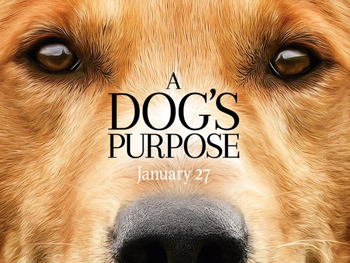 A Dog's Purpose premiere cancelled amid investigation into animal cruelty